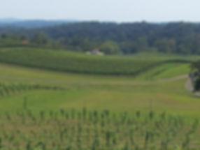 Vineyard Looking East 08-30-2012.jpg