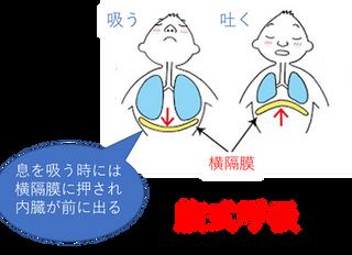ピラティスの呼吸法「胸式ラテラル呼吸」