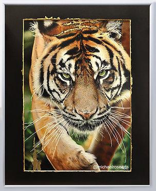 Tiger, Big Cat Gold Series