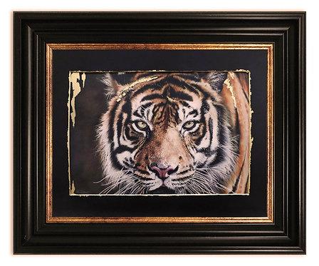Tiger 2, Gold Series
