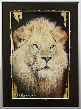Lion, Big Cat Gold Series
