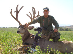 Trophy Mule Deer