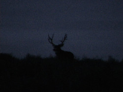 Deer102