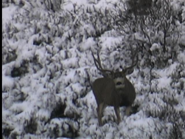 deer7 (2)