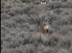 Deer6 (2)
