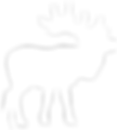 Trophy Elk Hunting