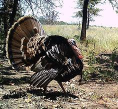 Turkey Hunt Oklahoma