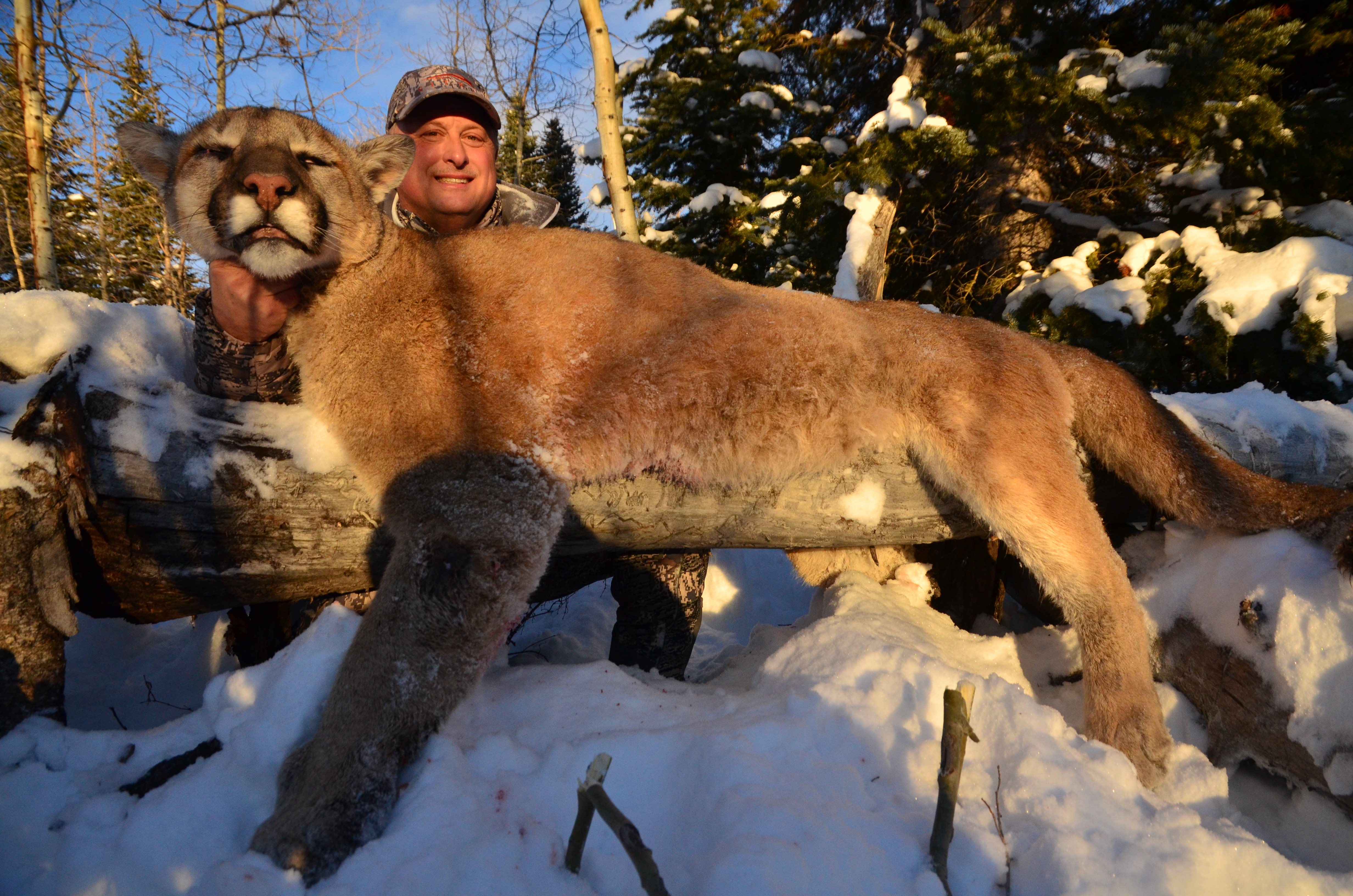 Trophy Mountain Lion308