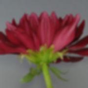 S_cross01_500-500-300x300.jpg