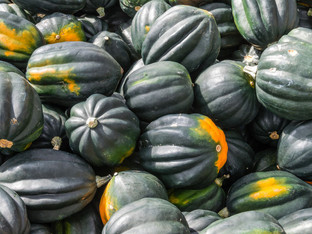 FOOD FORECAST: IT'S RAINING ACORN SQUASH!