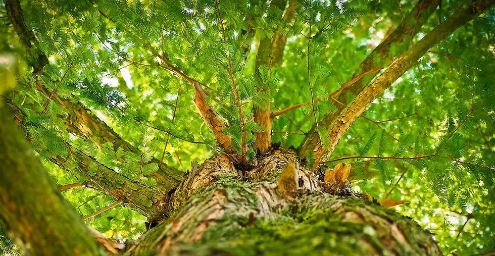 Baum von unten klein