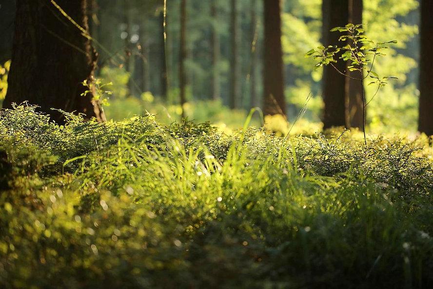 Waldboden%20klein_edited.jpg