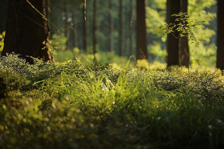 Waldboden klein.JPG
