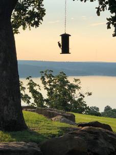 Bird Feeder Overlook