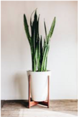 House plant 3.png