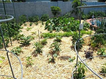 Straw mulch.jpg