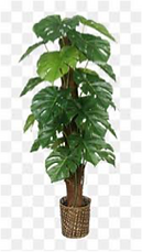 House plant 2.png
