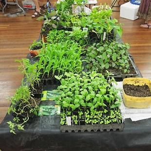 Seedlings Sep 1.png