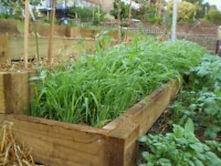 Green-manure-crops1.jpg