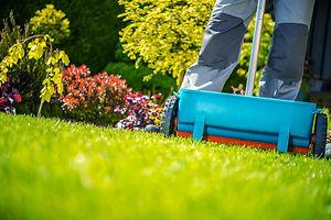 Spring Fertilization of Grass. Garden Wo