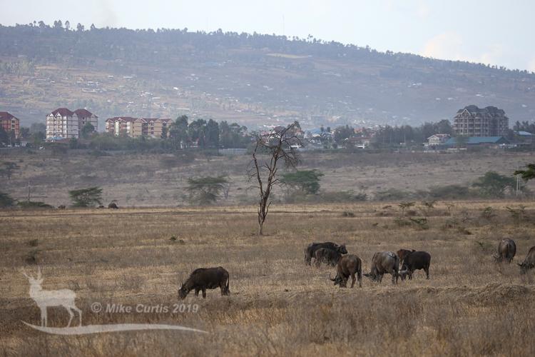 Nakuru city