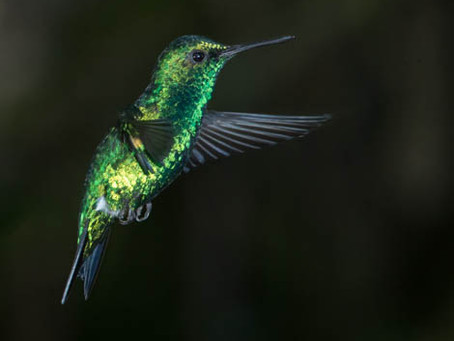 Hummingbird Gallery is online
