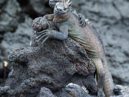 The Galapagos Gallery uploaded.... finally