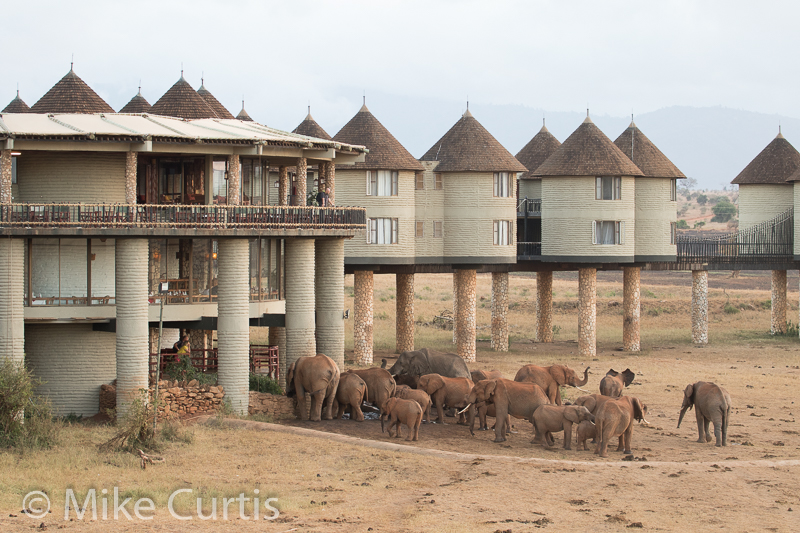Salt Lick Lodge, Tsavo West