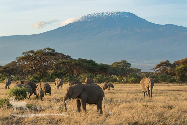 Elephants with Kilimanjaro