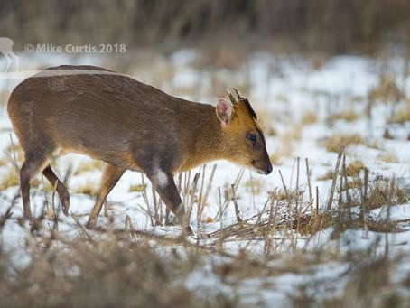 Winter wildlife in Cambridge