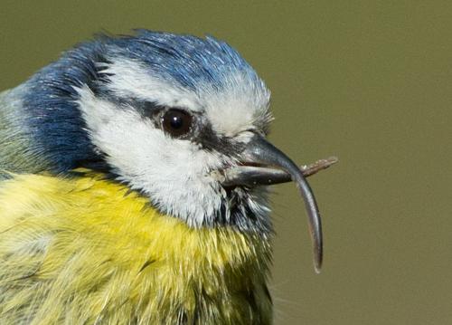Close up of deformed beak