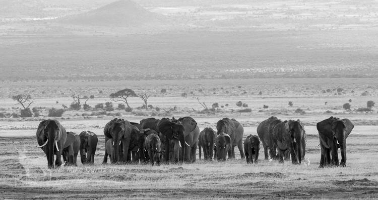 Amboseli B&W