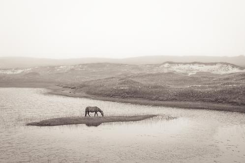 Lone Stallion at a Pond