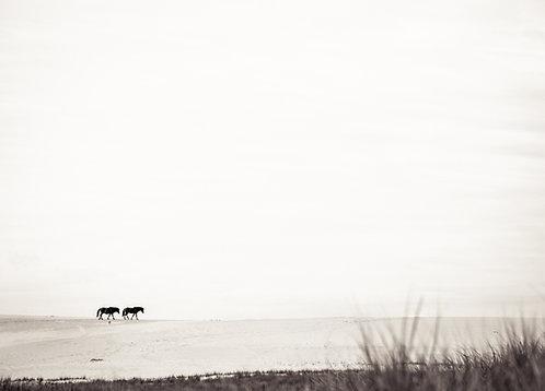 Dune Crossings