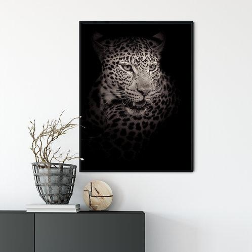 Fine Art Africa Leopard