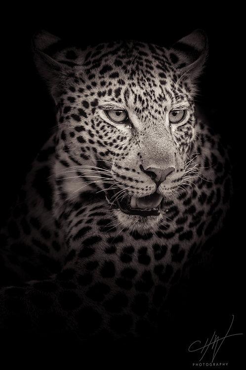 Fine Art Africa - Leopard