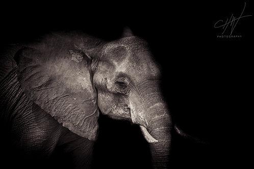 Fine Art Africa Elephant