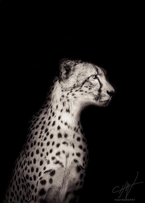 Fine Art Africa - Cheetah