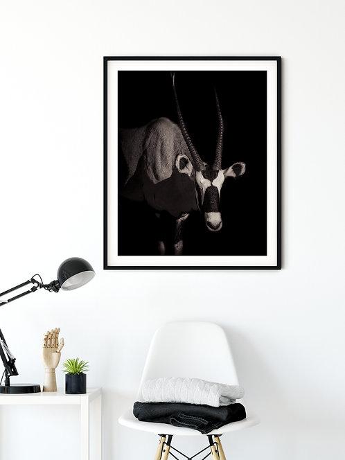 Fine Art Africa Oryx