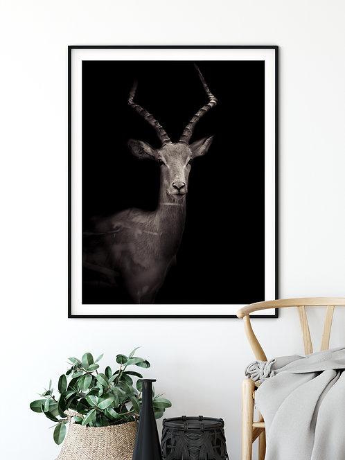 Fine Art Africa Impala