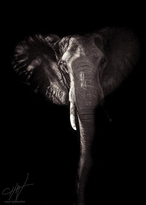 Fine Art Africa - Elephant