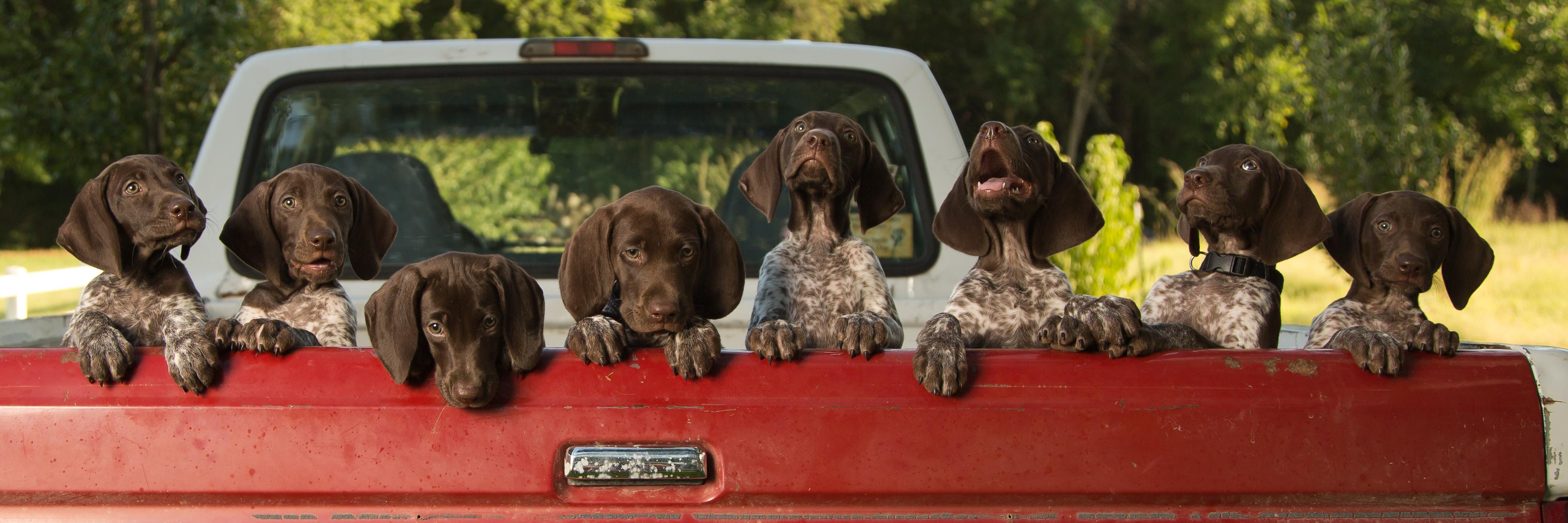 Riley's Puppies