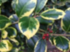 december tythorne garden design.