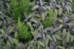 garden design with herbs tythorne garden design