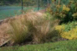 Stipa tenuissima Tythorne Garden Design.
