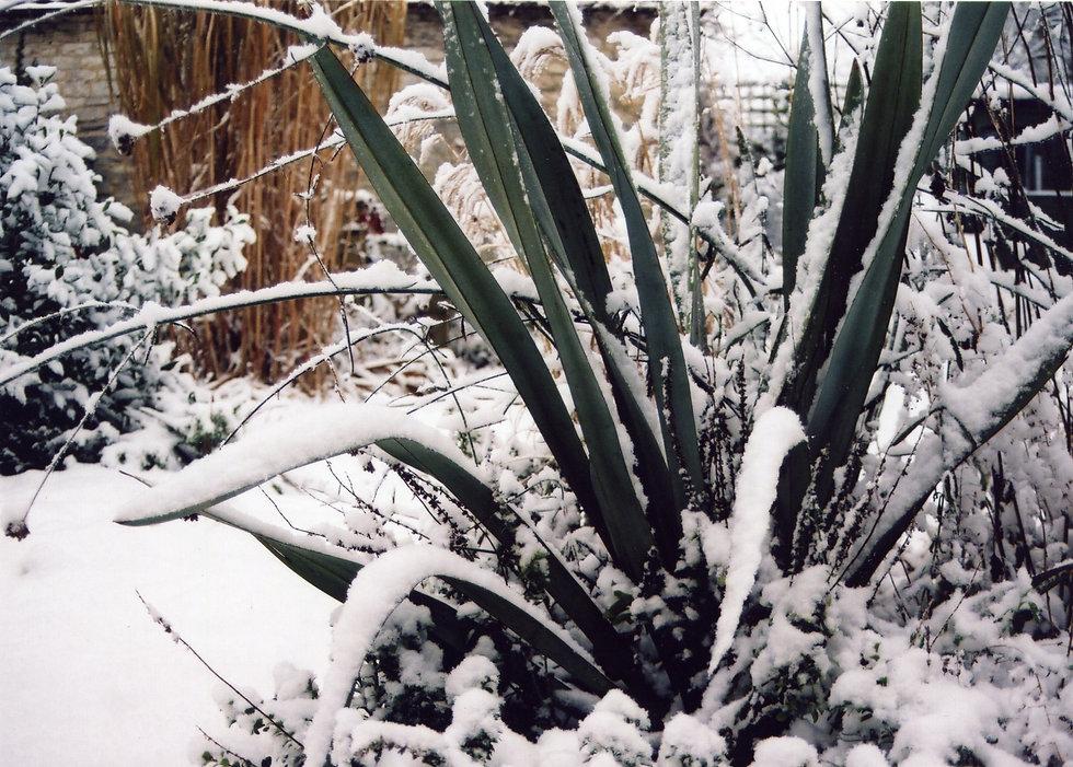 local planting designer Tythorne Garden Design.jpeg