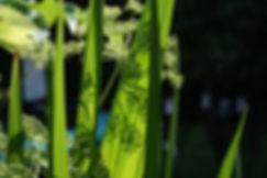 planting design by Tythorne Garden Design.j