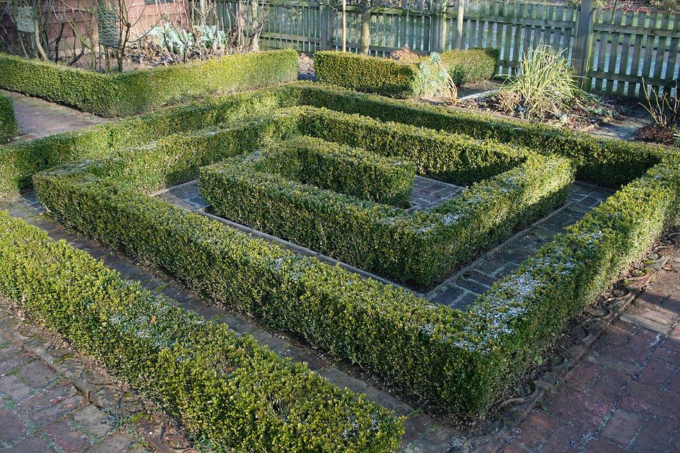 box hedge at barnsdale tythorne garden d