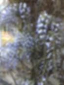 wisteria tythorne garden design.jpeg