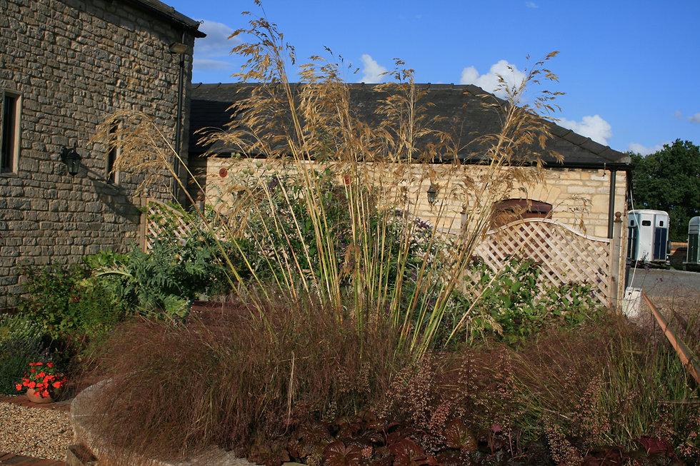 Stipa gigantea Tythorne Garden Design.JP